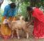 Para-veterinary